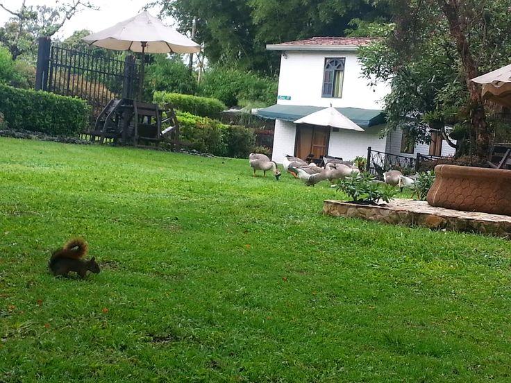 Contacto Inmuebles en medellin: En venta Lote 6.000 mts en Llanogrande, Antioquia ...
