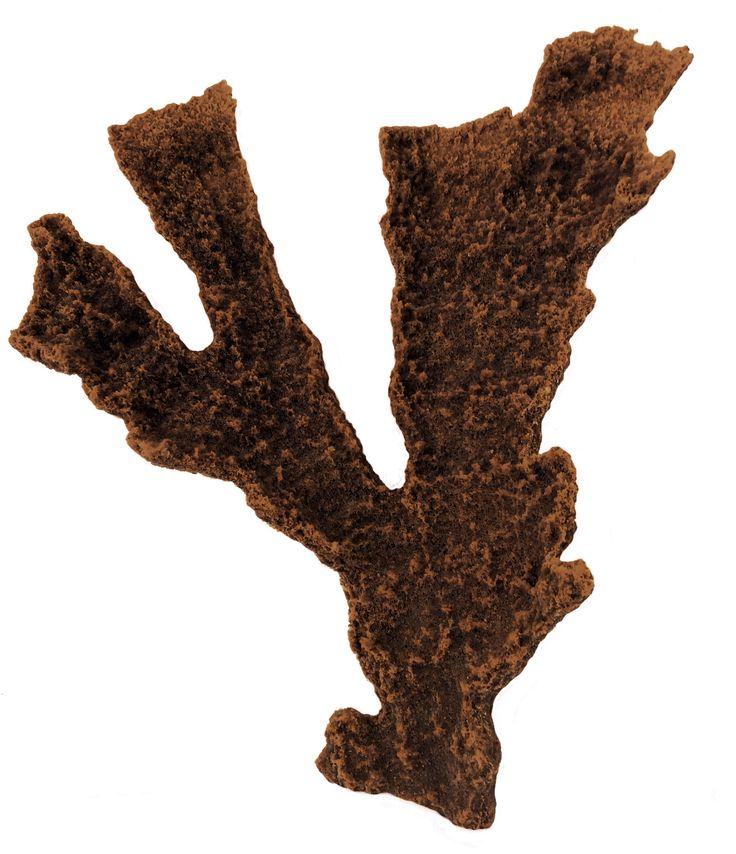 Acropora Palmata - Elkhorn Coral #01401