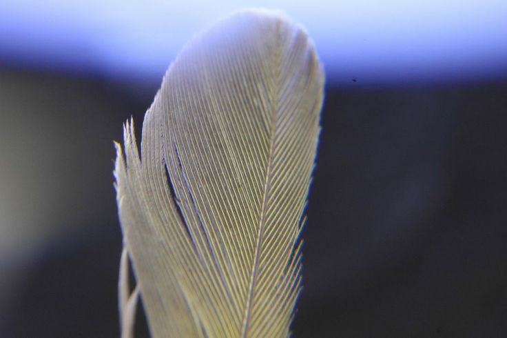 Feather Study  http://earth66.com/macro/feather-study/