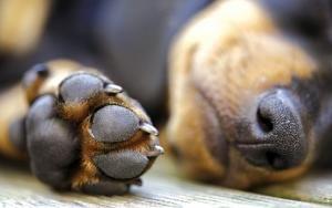 Como manipular um cachorro com dor? Muitas pessoas, quando vêem cães precisando…