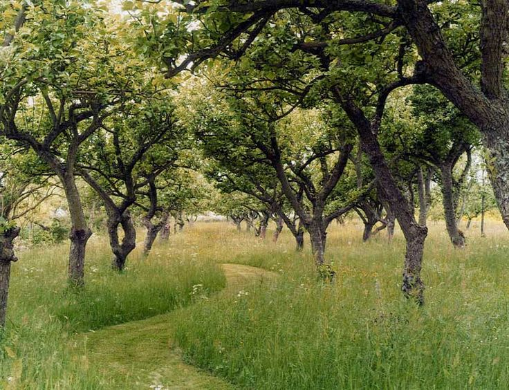 Orchard Path, think this would be great in my little piece of field!