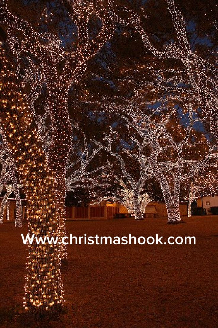 224 best christmas lights images on pinterest christmas lights how to wrap led christmas lights on the outdoor trees i need oak trees wrapped in clear lights outside my tented wedding reception mozeypictures Choice Image