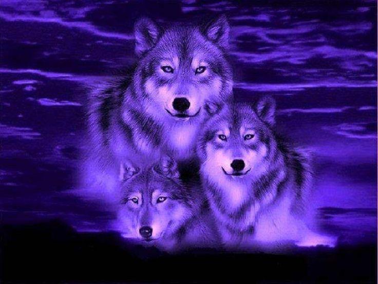 Wolf Fantasy Pics Blue Wolf Fantasy Wallpaper Best Hd