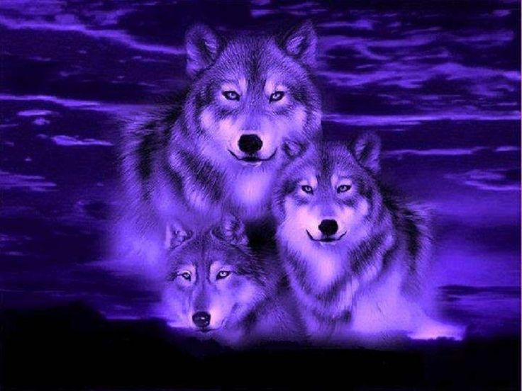 Love Wallpaper Hd Pack : wolf fantasy pics Blue Wolf Fantasy Wallpaper - Best HD ...