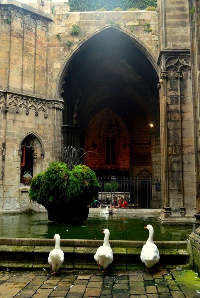 2. Barri Gotic - Gotische wijk. Kloostergang bij de Kathedraal. Hier groeien in de tuin magnolia's palmen en mispel-en sinaaasappelbomen  St. Eulalia, Claustre de la cathedral Catalonia