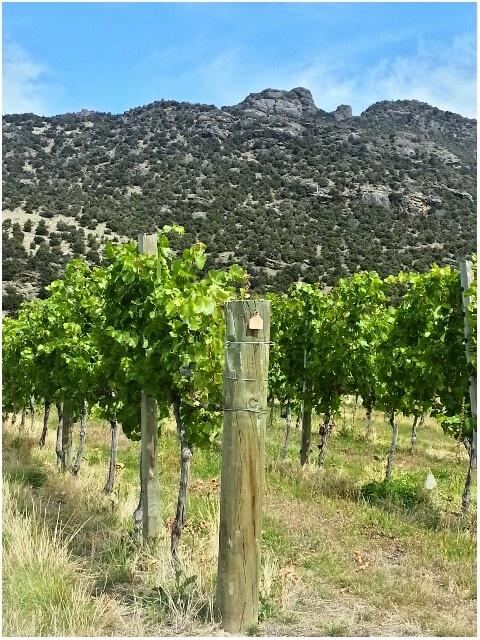 Prophet's Rock Vineyard. Pinot Noir
