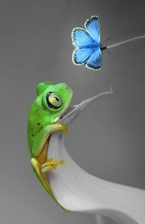 Green frog and blue butterfly