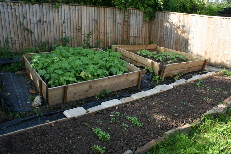 Veggie patch & Raised beds