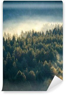 Fototapeta Zmywalna Misty pine forest on the mountain slope in a nature reserve