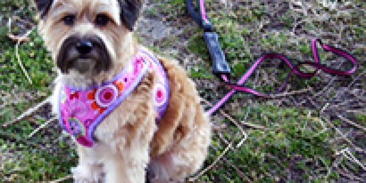 A A Bdaf B E Ae F Db Af on Tutorial Dog Harness Pattern