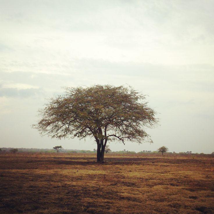 Savana Bekol - Baluran National Park
