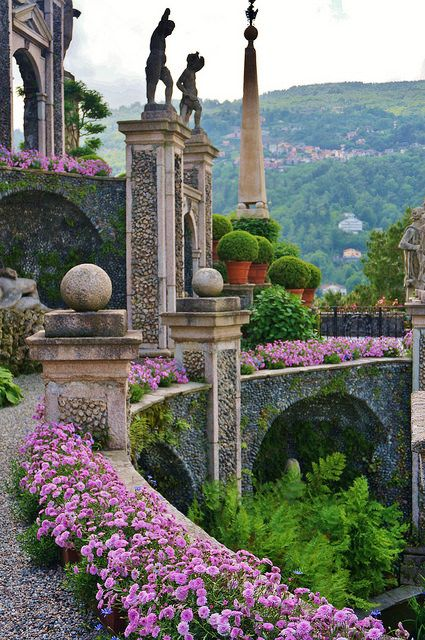 Argyranthemum on the edge of a wall | Lake Maggiore , Italy Lombardy