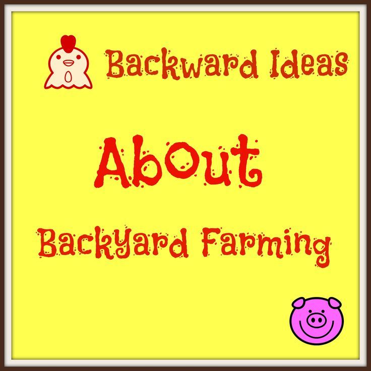Backward Ideas About Backyard Farming