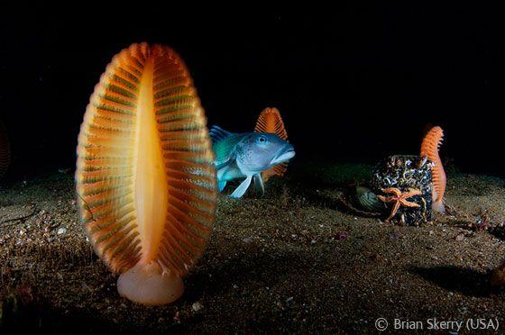 sea creatures/deniz yaratıkları