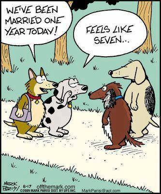 Dogs We Ve Been Married One 1 Year Today Feels Like Seven 7 Wedding