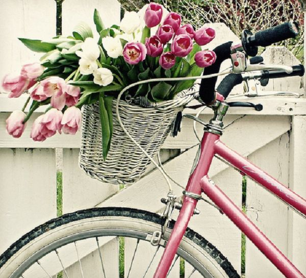 Pink Bike with Pink Tulips