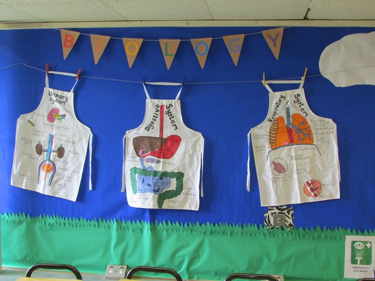 Science display. Respiratory system, Digestive system, Urinary system on a washing line
