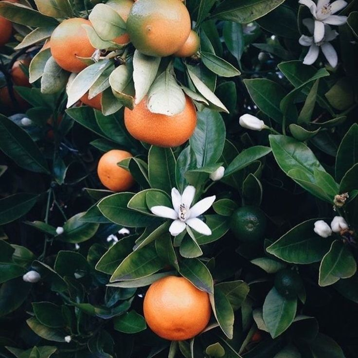 It is our belief that incorporating natural ingredients into a daily skincare ritual encourages a mindful, safe approach to beauty and a sense of being at one with the world 🍊 Shop via www.atoneskincare.com.au
