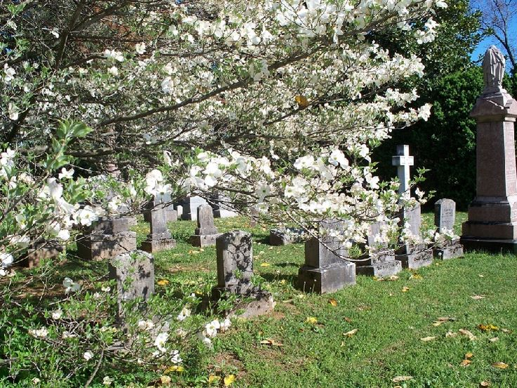 Murfreesboro Post reader Carol White took this beautiful spring photo at historic Evergreen Cemetery where the dogwoods are in full bloom.
