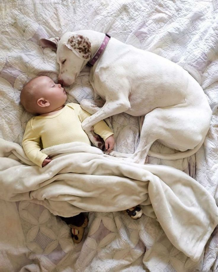 Baby Boy Named Archie and Nora the Dog are The Cutest Sleeping Buddies Ever