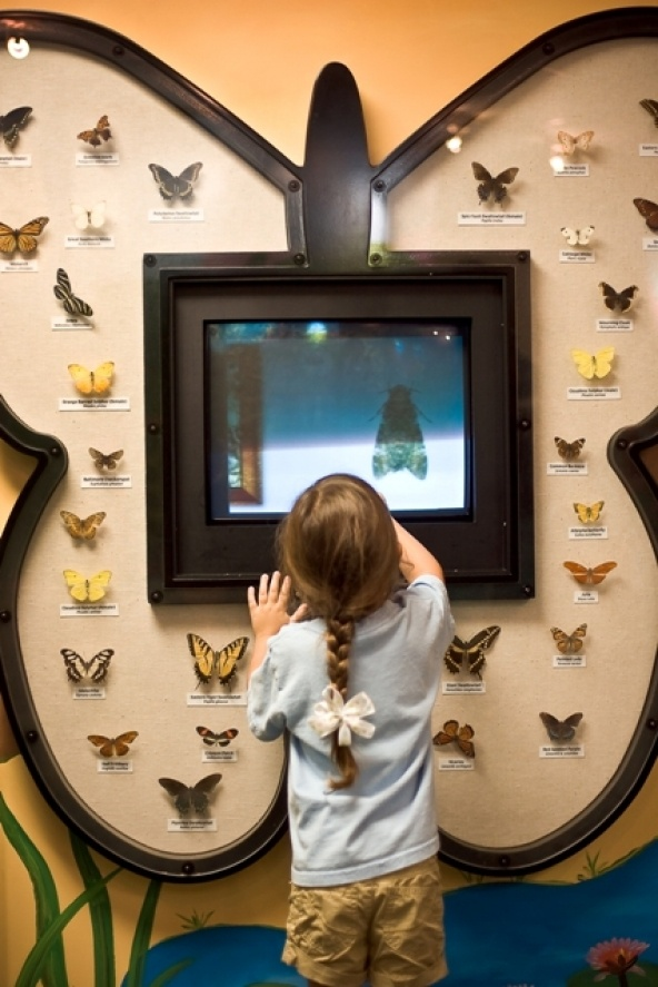 Butterfly display with interactive screen: