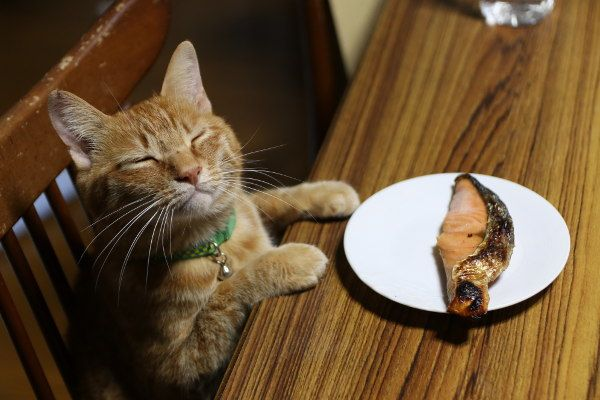 No thank you! I would like tuna for supper and dessert! Can you can pay for the bill