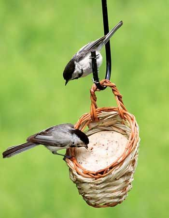 Article - Top Ten Mistakes People Make When Feeding Birds