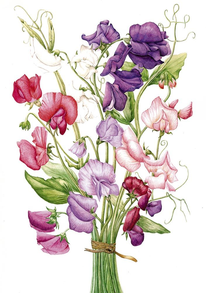 Sweet Peas.  My mom had these beautiful smelling flowers all over the backyard when I  growing up.