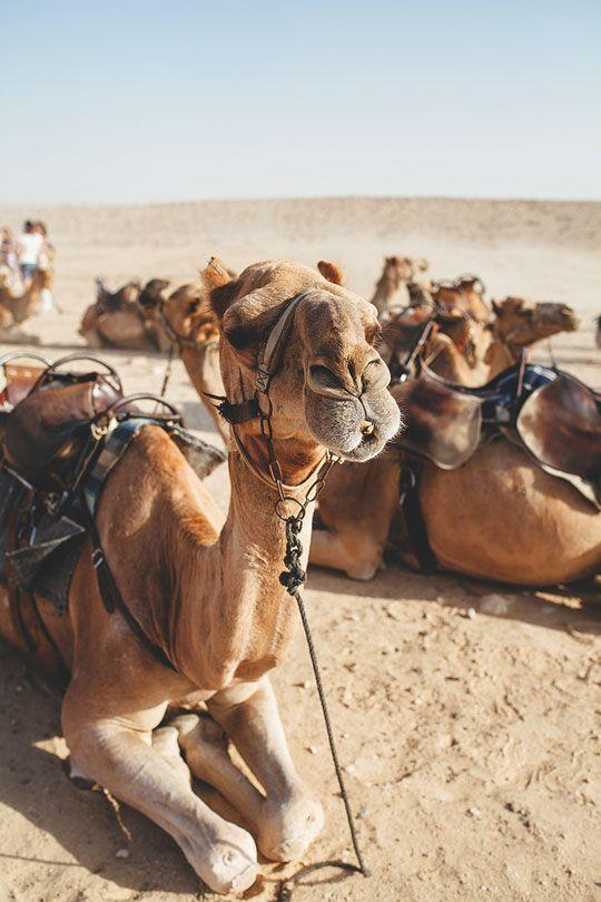 "thelavishsociety: "" Hi Camel by My Name is Yeh | LVSH """