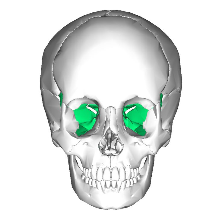 sphenoid bone: | physiotherapy & occupational therapy | pinterest, Human Body