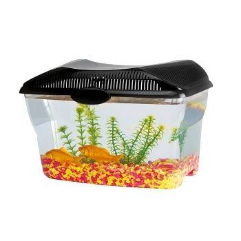 Aquarium plastique en guise d'escargotière