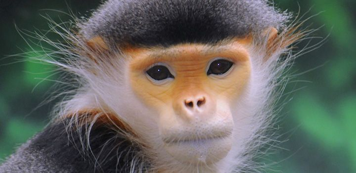 Satellite data to map endangered monkey populations on Earth