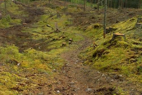 Hogstfelt ved Grønbråtan