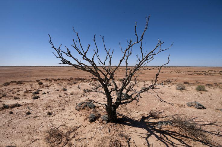 https://flic.kr/p/tJwooA | SIMPSON DESERT DESERT | Simpson Desert outback australia