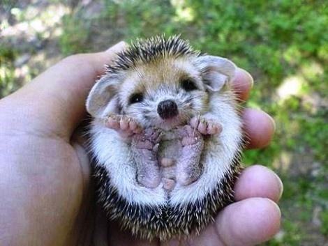 20 χαριτωμένα ζώα μωράκια! - Guests Editors - LiFO