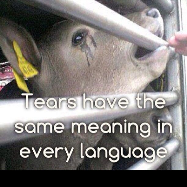 4th most inteeligent animal on earth and we have put them in concentration camps to kill by the billions each year...so we can eat bacon.....as a species, we humans are an abomination to all others, and to God