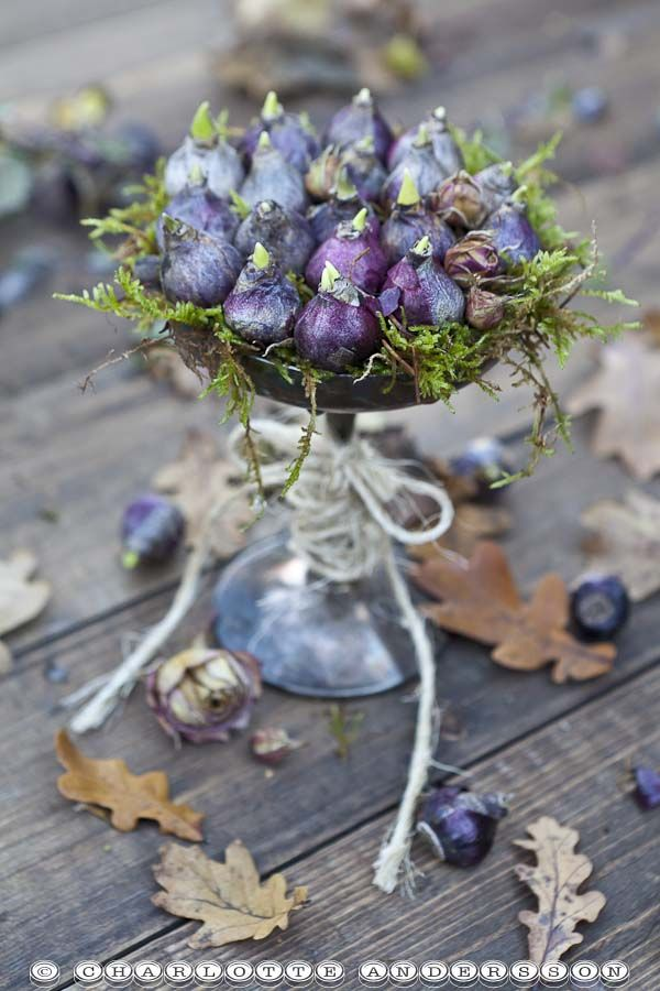 ✿) .bulbs with moss and greenery :)