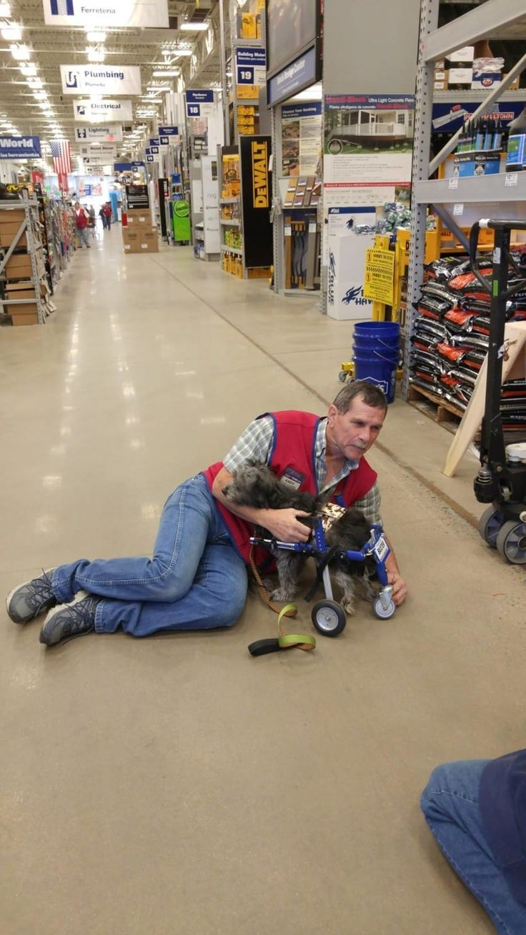 When a tiny little dog named Baxter needed a hand, he found a lifelong friend in Andy Morales, an employee at Lowe's Home Improvement. Baxter is a tiny little rescue pup who lived a hard life in Armenia before finding his way to his forever home living with Amy Jo Martin. Like this dog in...