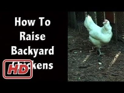 Who needs a grid when you have chickens!