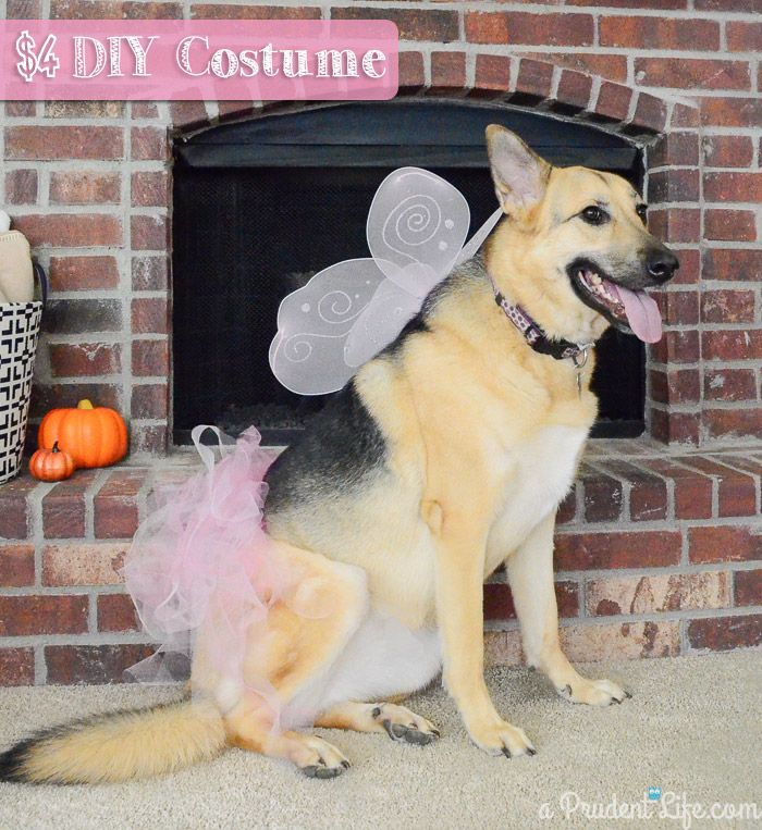 Make a quick and inexpensive fairy princess Halloween costume for your big dog!