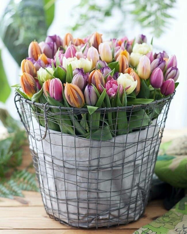 тюльпаны в ведре фото отделка дома пеноблоков