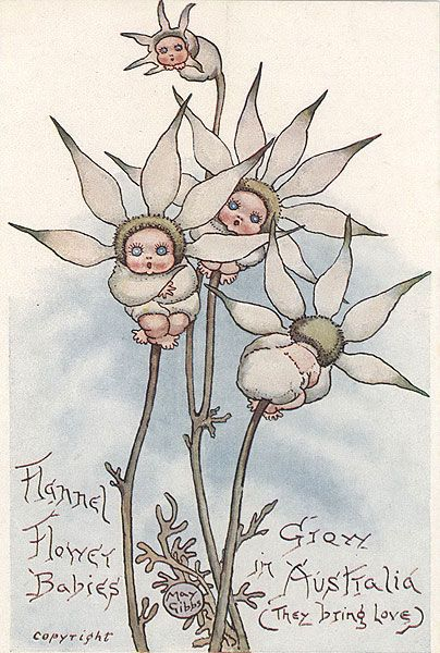May Gibbs Flannel Flowers - click through has print for sale - Flannel Flower Babies Grow In Australia  (They Bring Love)