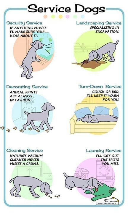 Service Dog Tasks For Social Anxiety