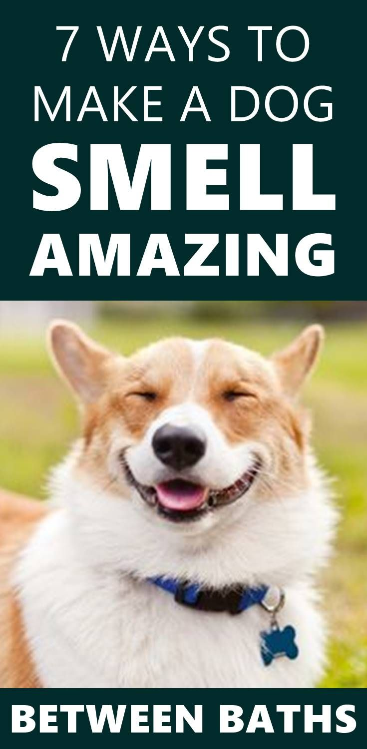 Does Your Dog Stink It S True Dogs Sometimes Can Be Very Smelly