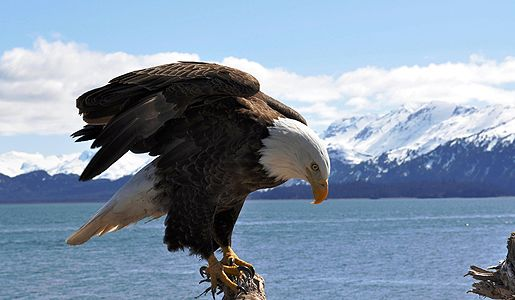 Experience the amazing wildlife during the Transpacifiic Crossing between port calls in Russia's Petropavlovsk and Dutch Harbor, Alaska.