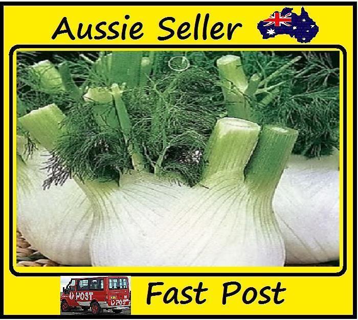 Europe fragrant bulb fennel seeds organic vegetable 100seed