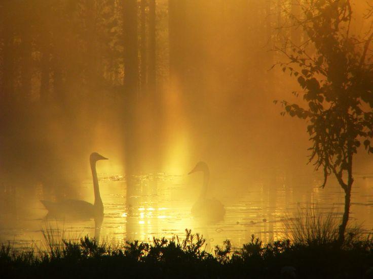 Valon linnut.