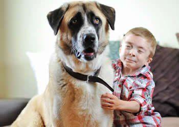Owen Howkigs é um menino britânico de sete anos de idade que é um dos raríssimo casos de vítimas da síndrome de Schwartz-Jampel, doença que afeta os músculos e os torna tão tensos que impedem os ossos de crescer e o doente de se movimentar, o pequeno garoto transformou-se numa criança tímida e insegura.  Um cachorro da raça pastor-da-anatólia que já havia passado por uma grande superação. O cão foi abandonado com graves ferimentos junto à uma linha férrea e acolhido pela família de Owen.