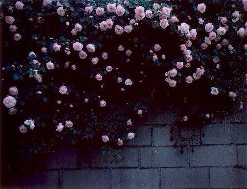 Flowers ☂ ☻  ☂ ☻