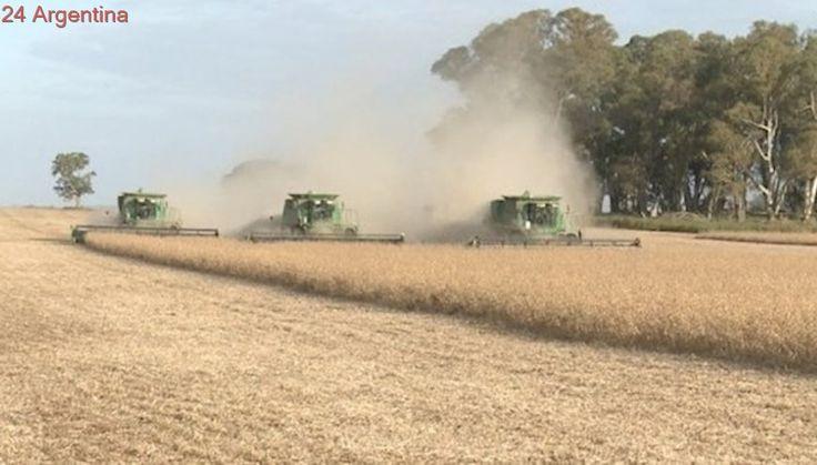 Mercado de soja: pulseada entre cosechas históricas y demandas firmes